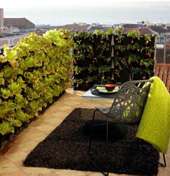 legume pe terasa 1