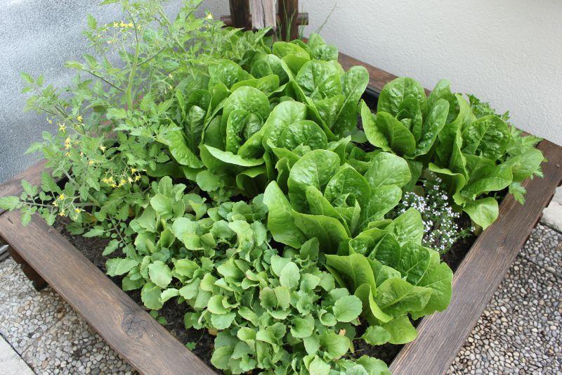 salata in ghiveci