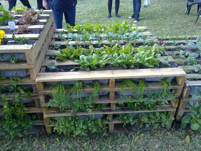 plante-paleti