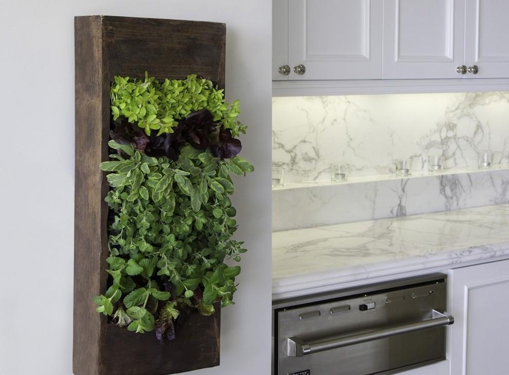 plante aromatice de interior13