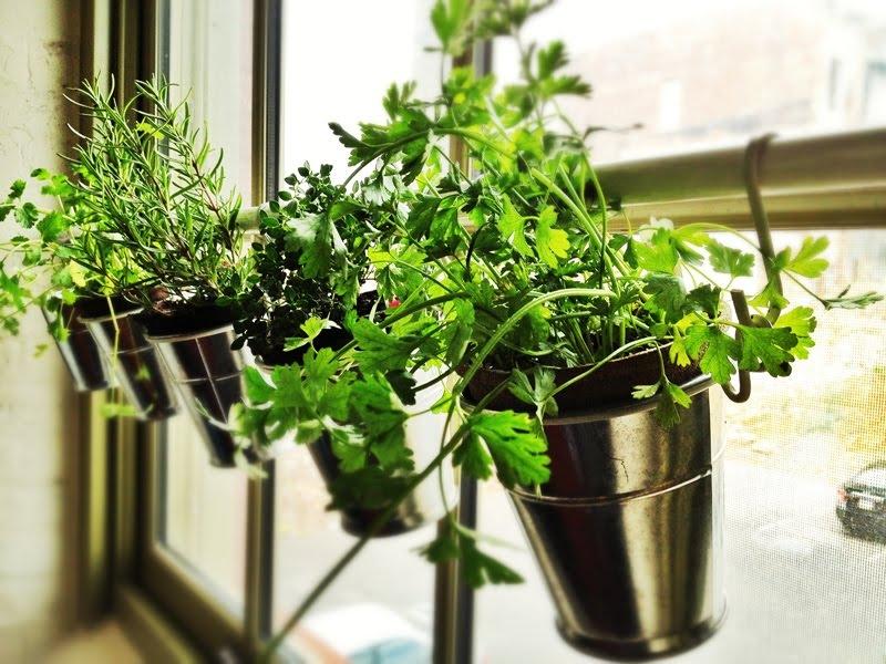 plante aromatice de interior15