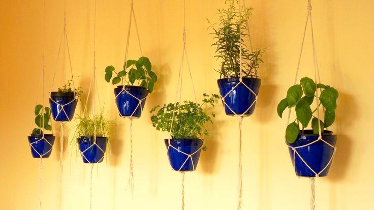 plante aromatice de interior3