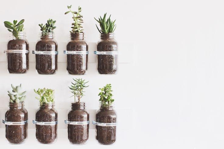 plante aromatice de interior6