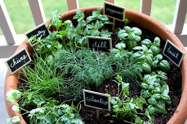plante aromatice de interior7
