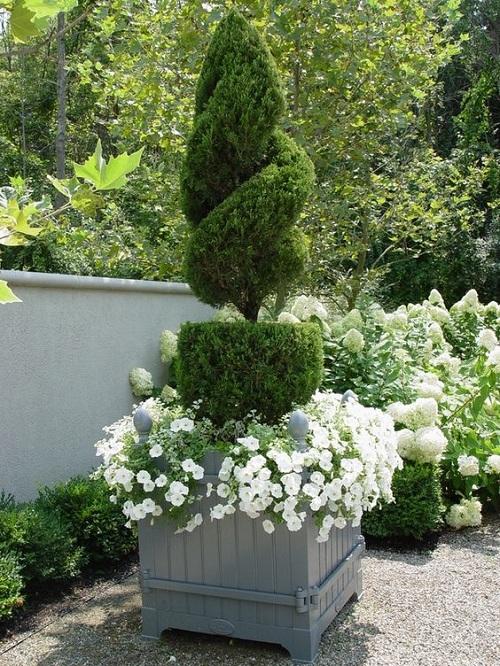 arbustii de gradina