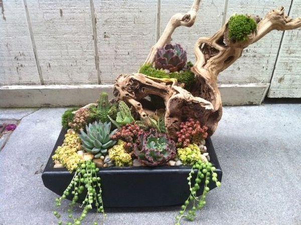 plante suculente 9
