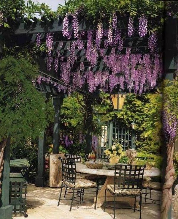 wisteria 10