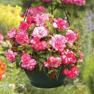 flori-spectaculoase