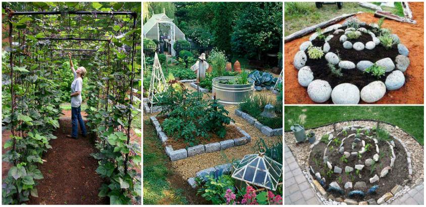 gradina superba de legume (24)