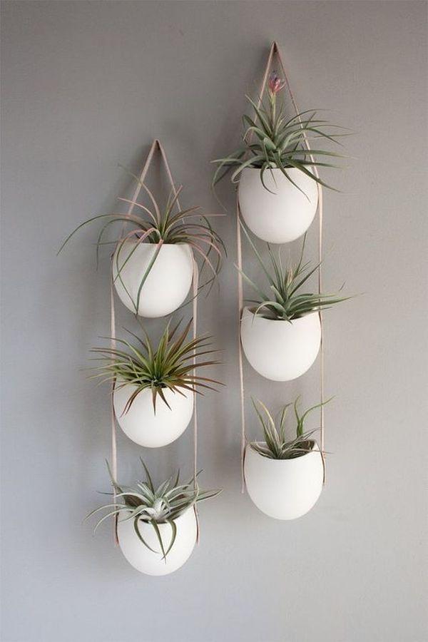 plante de aer