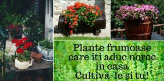 plante frumoase