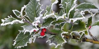 protejarea plantelor de inghet