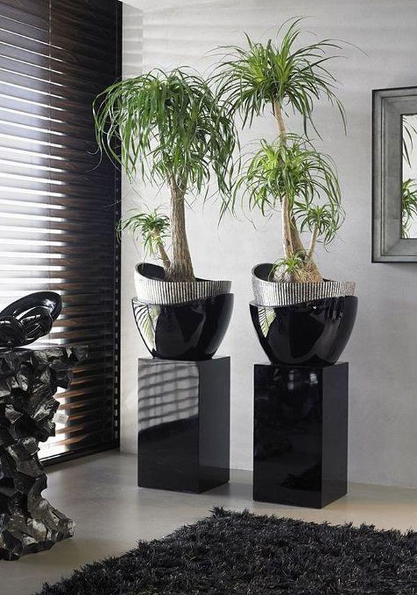 plantelor de apartament