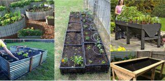 spatii pentru a planta legume in gradina