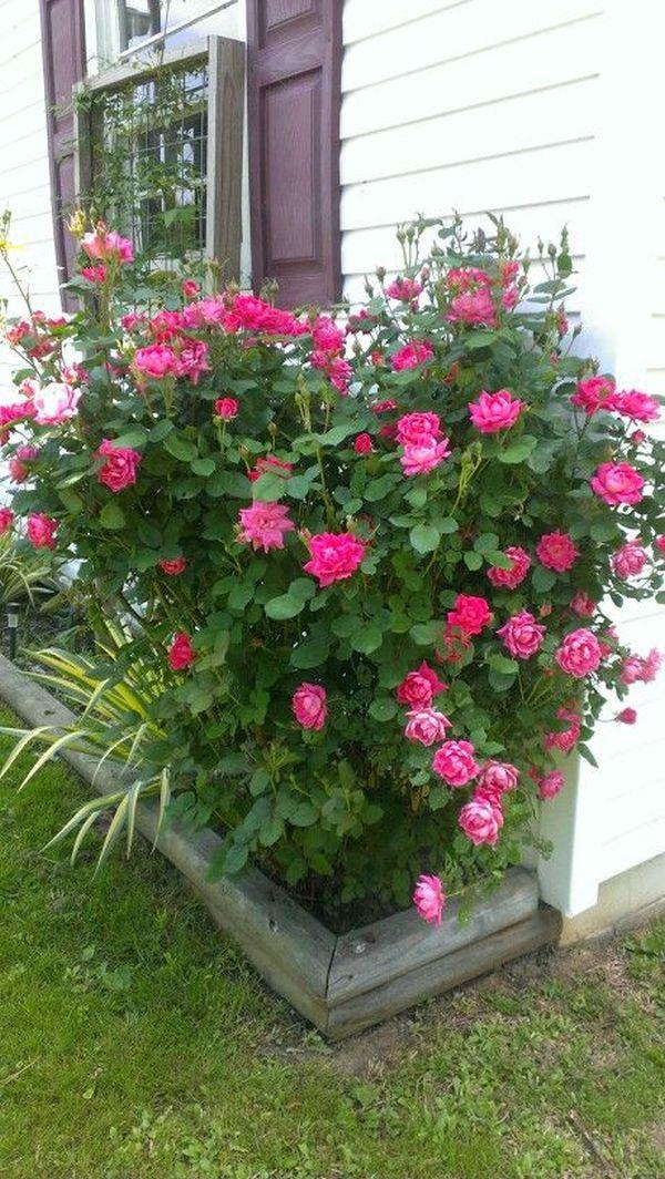 aranjamente florale in ghivece