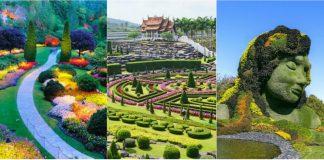 gradini botanice