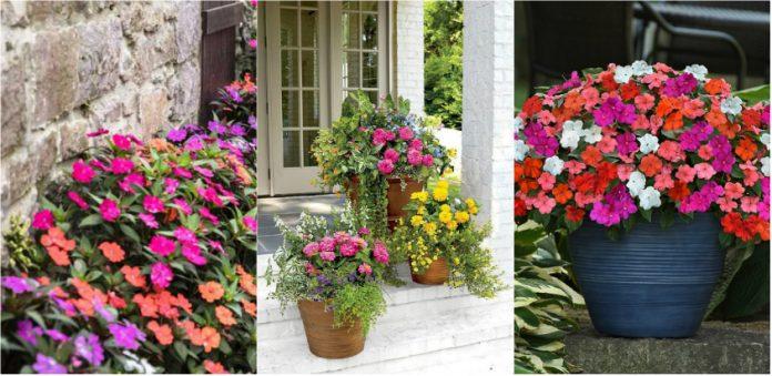 flori pentru o terasa de vis