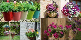 florile in evidenta