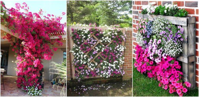 flori aranjate pe verticala