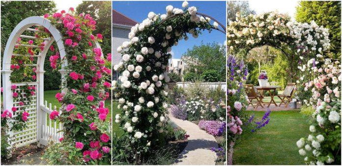 arcada superba de flori