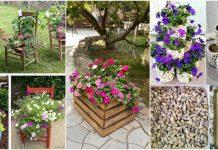 paturi de flori spectaculoase