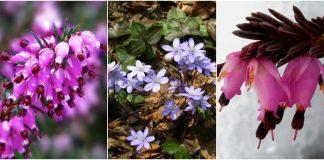 plante rezistente la frigul iernii