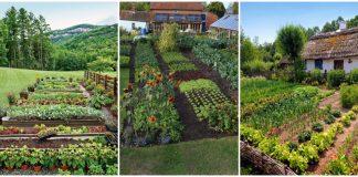 gradini de legume