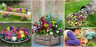 florile in curtea casei