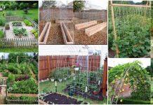 legume sanatoase