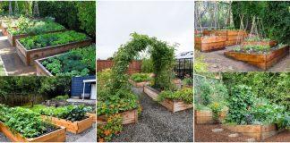 paturi de legume inaltate